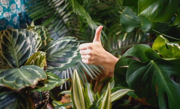 someone gives a thumbs up in a jungle of plants